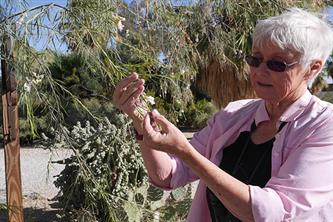 Learn about desert plants and trees with Pat Flanagan