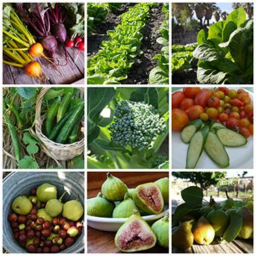 Winter & Summer Assorted Harvest from Garden