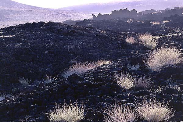 Lava Flow at Cinder Cone Landmark Mojave National Preserve NPS Photo